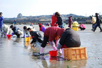 今が旬!愛知県はアサリ漁獲量全国1位!