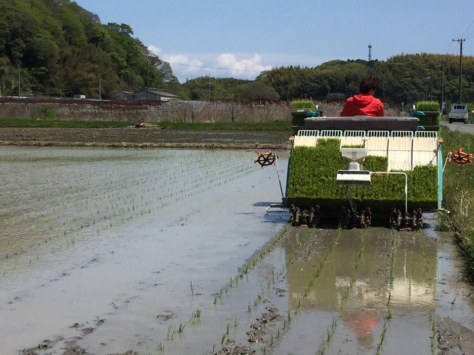 米つくり農家の後継者発見