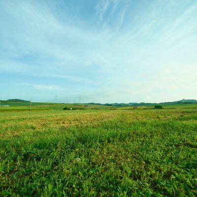 雄大な農地