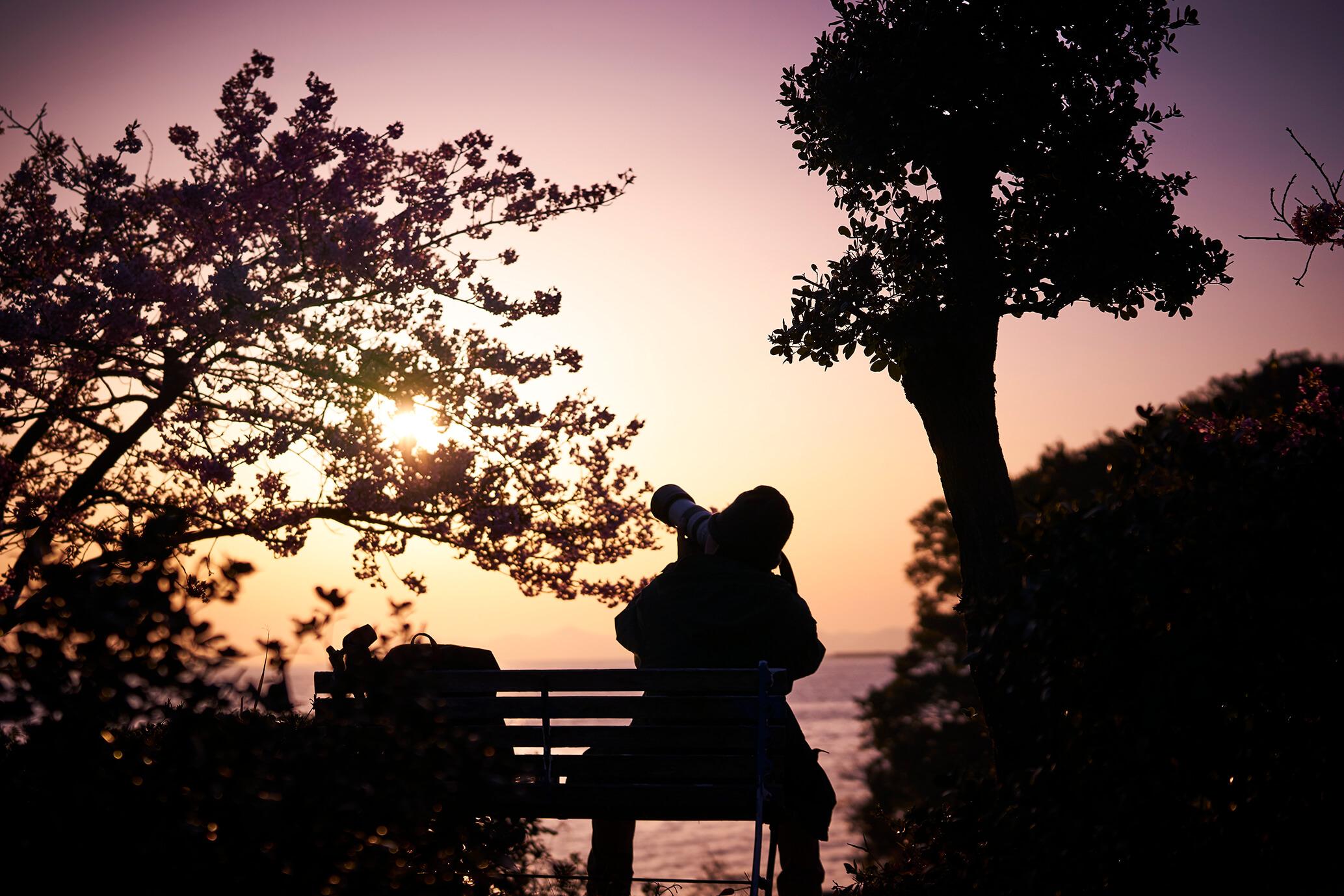 河津桜とカメラマン