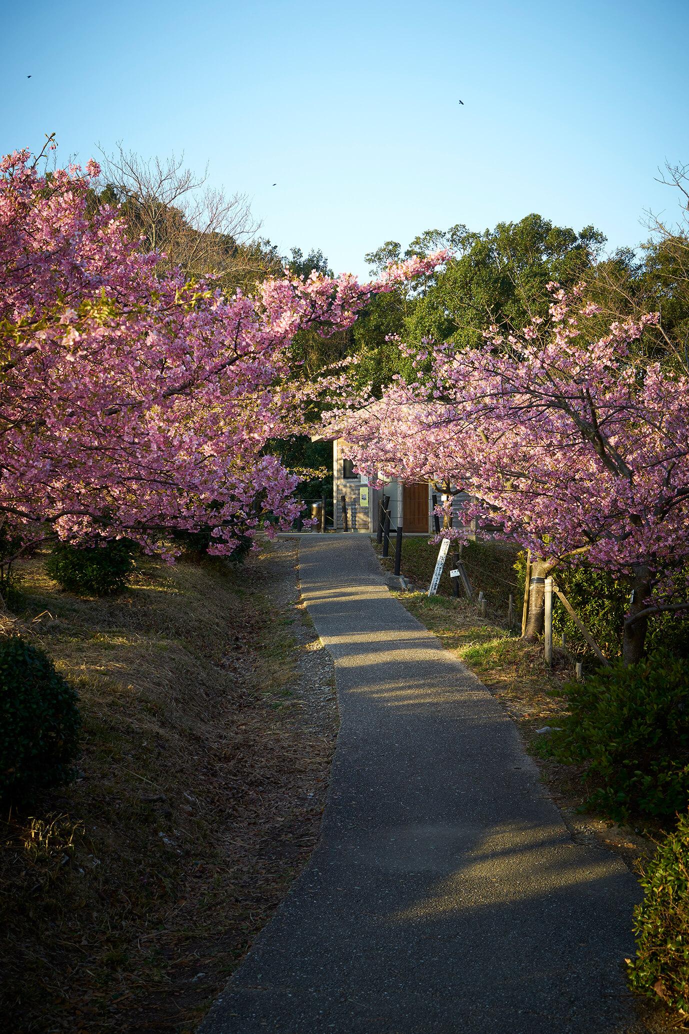 聖崎公園の散策路