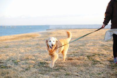 ワンちゃんと過ごす南知多、海辺の風を感じながらのんびりお散歩