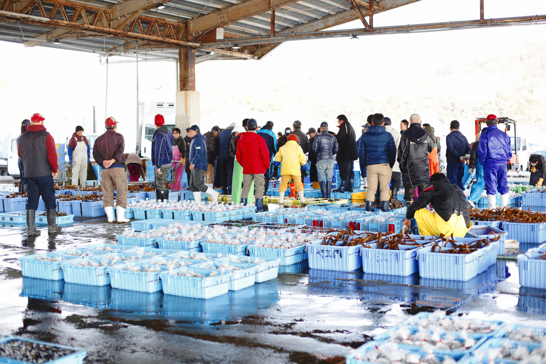 セリで賑わう「豊浜漁港」